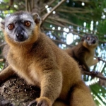 Madagascar Excursions 3
